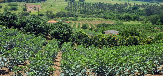 Valinhos: Passeio rural valoriza as frutas com a chegada da Festa do Figo